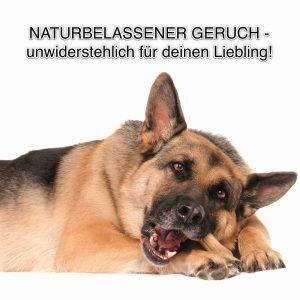 DSH Deutscher Schäferhund Knochen Kauknochen Fressen Kauen