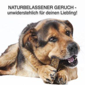 ein alter Schäferhund Mischling kaut auf einem Knochen, Hintergrund weiß